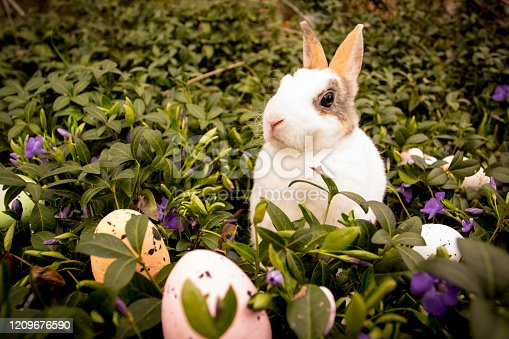 istock Easter rabbit and eggs in the grass. 1209676590