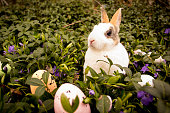 Easter rabbit and eggs in the grass.