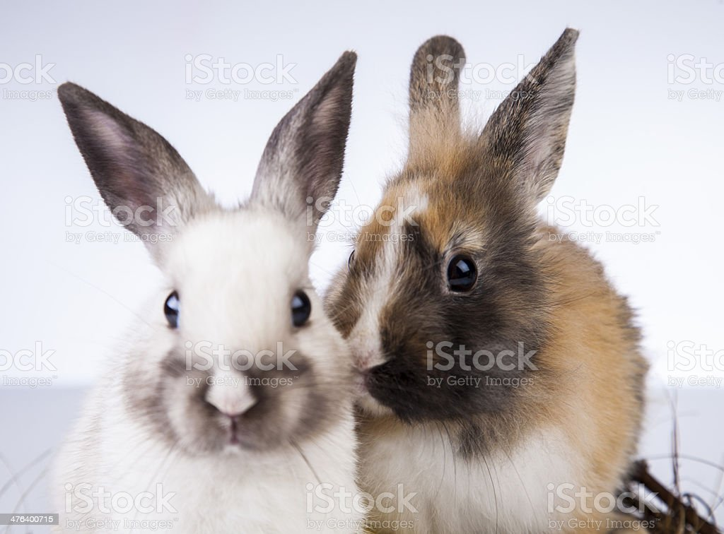 Easter, Rabbit, Bunny, Egg stock photo