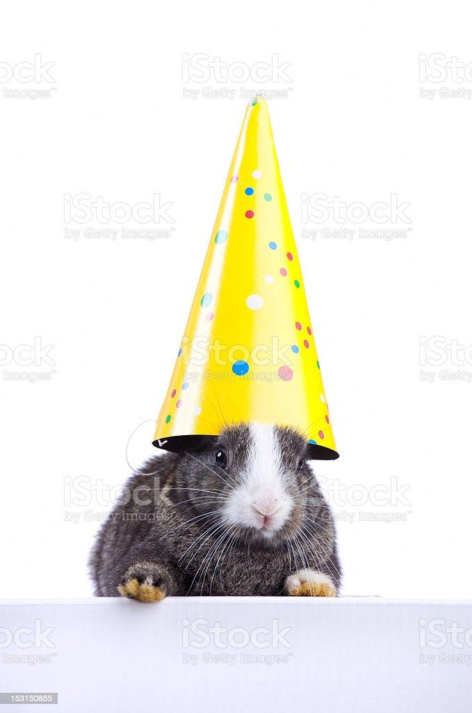 Ostern Hase hält eine party Hut – Foto