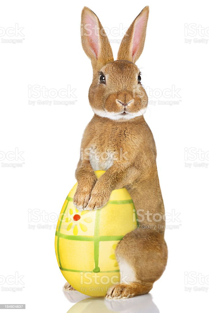 Easter Rabbit royalty-free stock photo