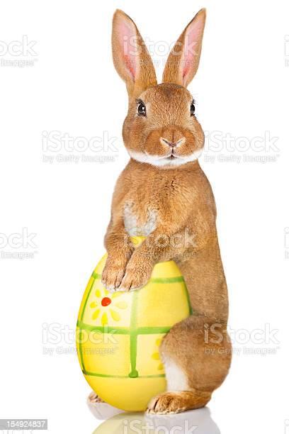 Easter rabbit picture id154924837?b=1&k=6&m=154924837&s=612x612&h=vhnmh0uy4mdnmx6rfcwcm4 qegnl8vnzs9ivdto17a8=