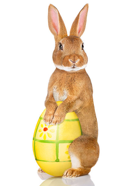 easter rabbit - easter bunny stock photos and pictures
