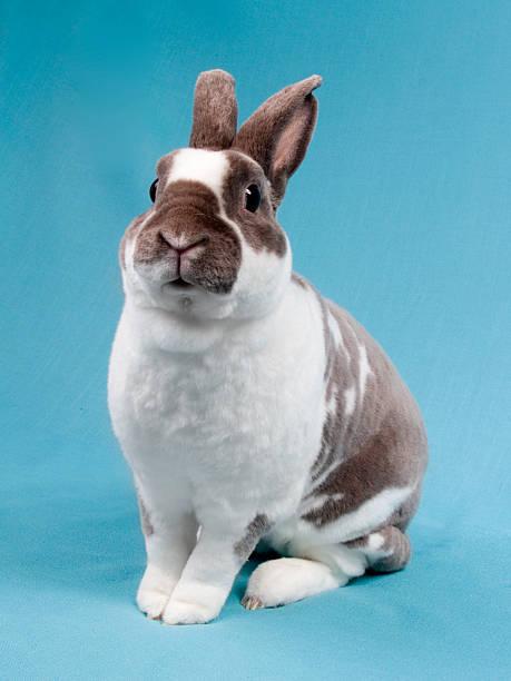 ostern rabbit - plüschhase stock-fotos und bilder