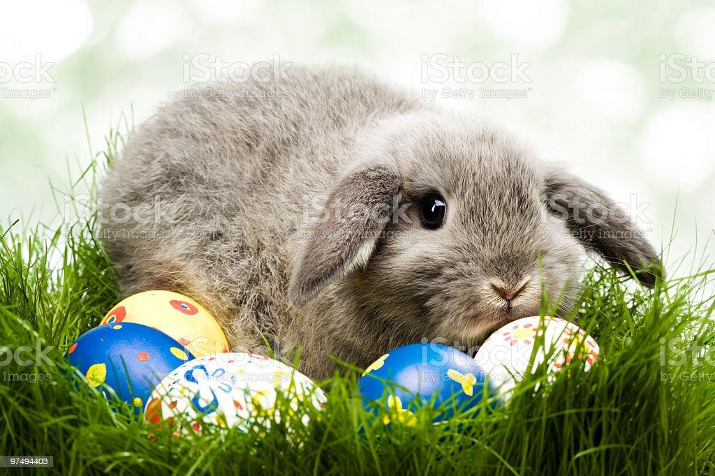Easter rabbit royalty-free stock photo