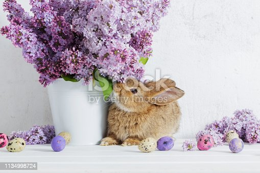 istock Easter rabbit with lilac in vase on white background 1134998724