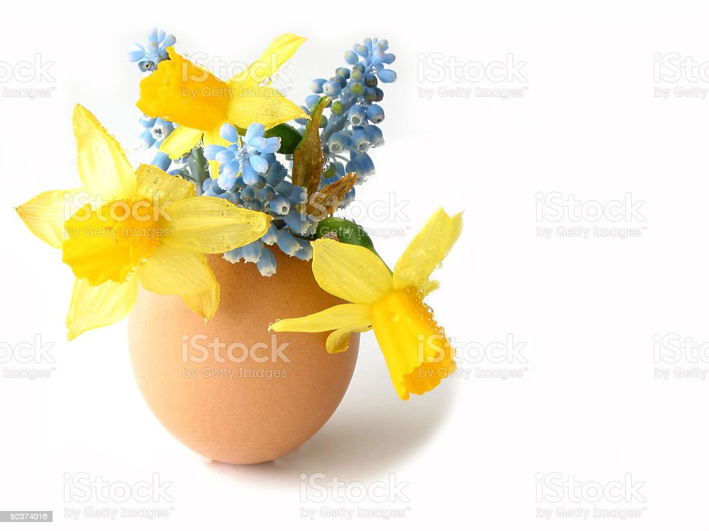 Easter shell royalty-free stock photo