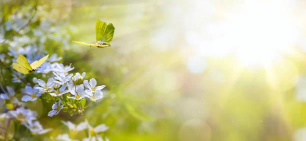 Easter spring flower background fresh flower and yellow butterfly on picture id643782026?b=1&k=6&m=643782026&s=612x612&w=0&h=orbgx9tjl3llwyw9mn2lbva ja9shrxxus99q9i15qs=