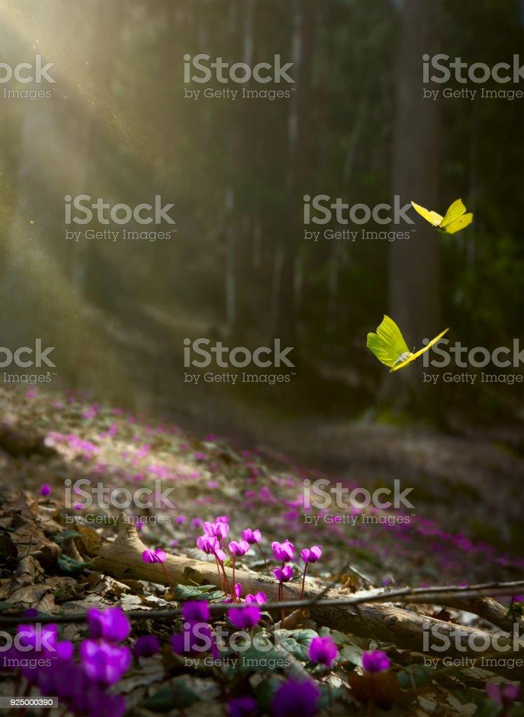Fondo de flor de primavera de Pascua; flores frescas y mariposa amarilla sobre fondo de bosque de primavera - foto de stock