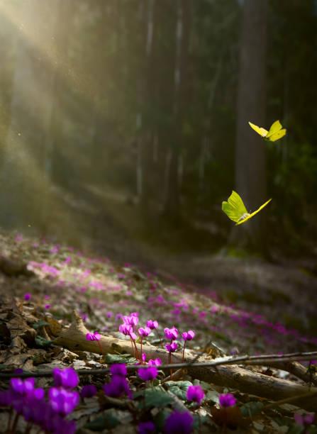 fondo de flor de primavera de pascua; flores frescas y mariposa amarilla sobre fondo de bosque de primavera - escena de tranquilidad fotografías e imágenes de stock