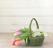 Easter Spring Tulips in a Moss Covered Easter Basket on an Old Rustic White Wood Background