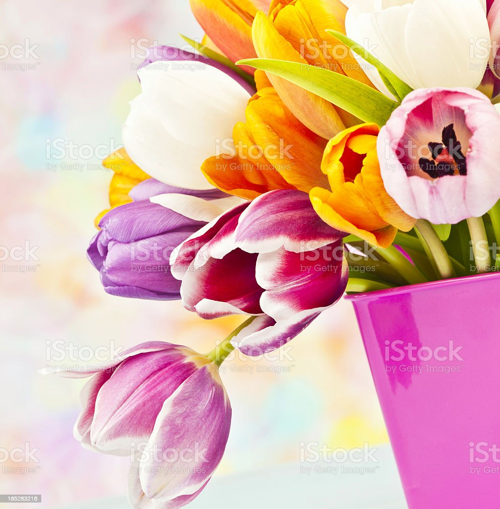 Easter Tulip Bouquet in Pink Pail royalty-free stock photo
