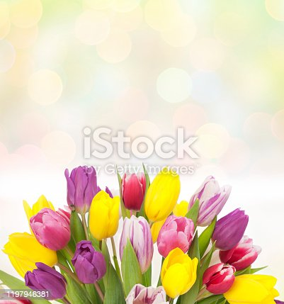 Tulips for Easter, Mother's Day, Woman's Day, Birthday or any occasion on a defocused pastel lights background