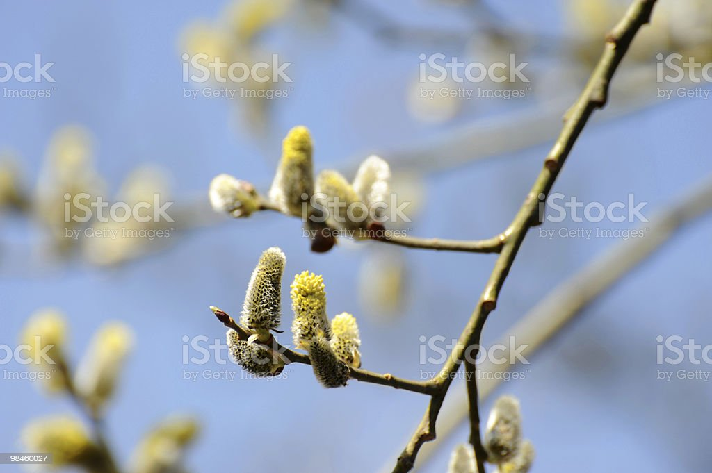 Easter Twig royalty-free stock photo