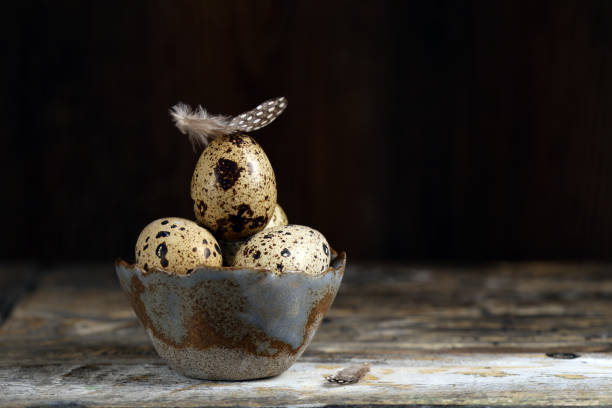 ostern mit wachteleiern - wachtelei stock-fotos und bilder