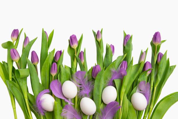 osterhase mit leichten lila tulpen mit ostereiern und federn, die auf weißem hintergrund isoliert sind. frühlingsblumen und pflanzen. hintergründe für urlaub - schöne osterbilder stock-fotos und bilder