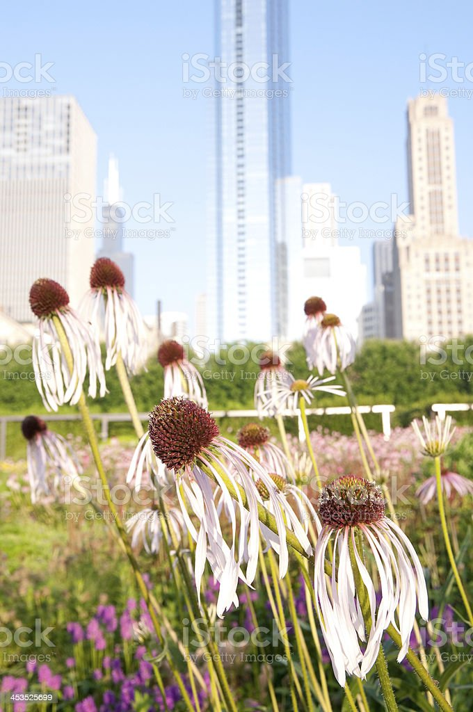 Eastern Bee Balm and Skyline royalty-free stock photo