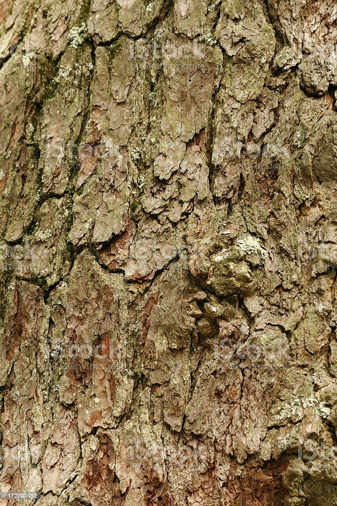 Eastern Hemlock Tree Bark stock photo