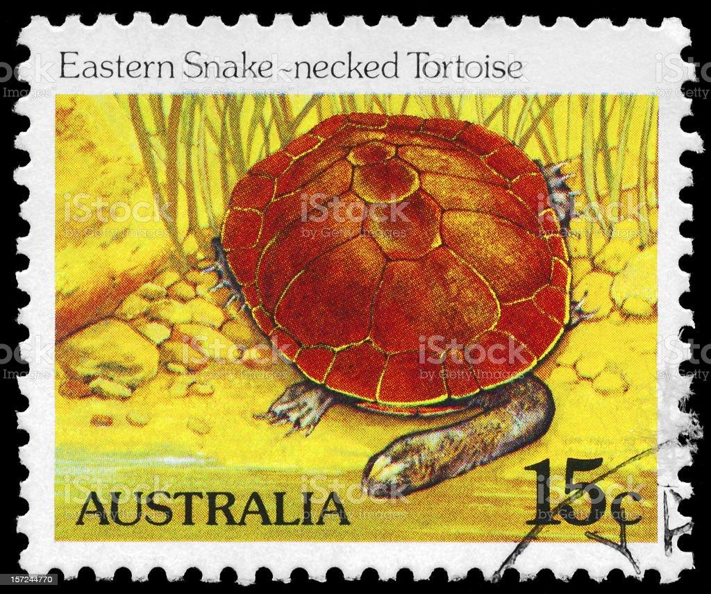 Eastern Snakenecked Tortoise royalty-free stock photo
