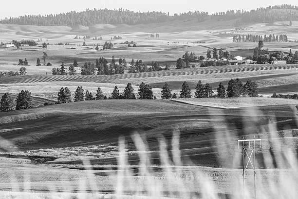 Eastern Washington Farmland Monotone stock photo
