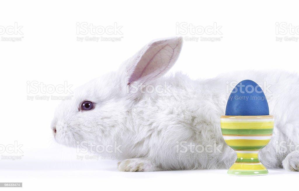 Easter-rabbit royalty-free stock photo