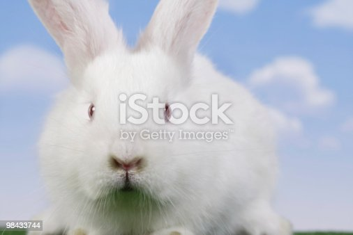Easterrabbit Stock Photo & More Pictures of Animal