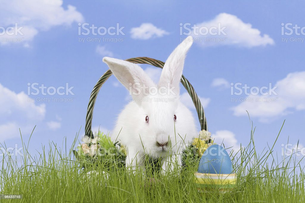Easter-rabbit royalty-free stock photo