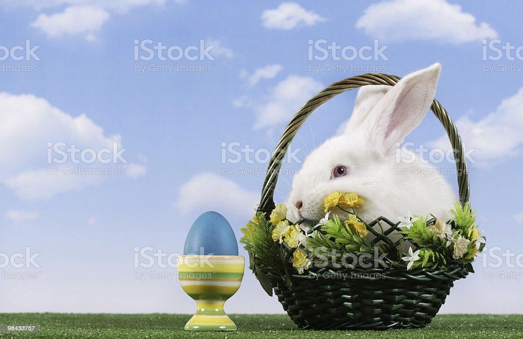 Coniglio di Pasqua foto stock royalty-free