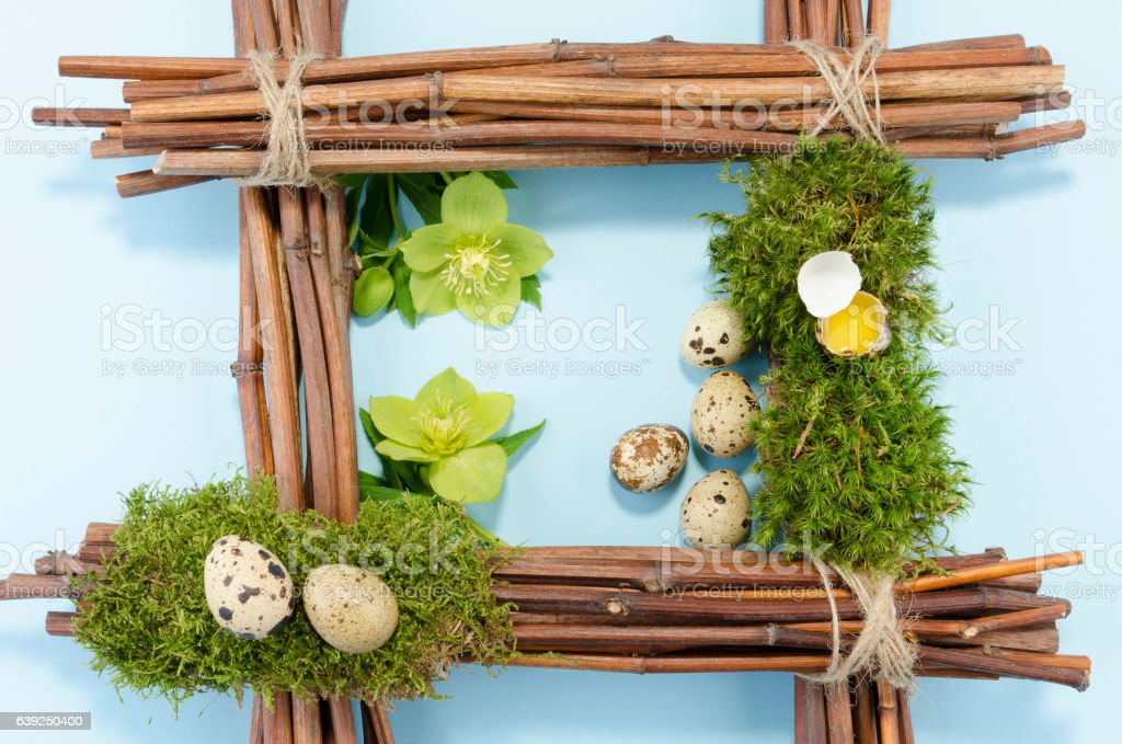 Eastre frame with six quail eggs and two hellebore flowers stock photo