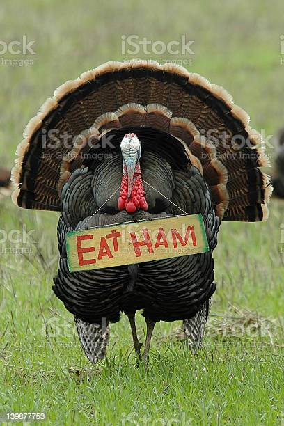 Photo of 'Eat Ham' Turkey