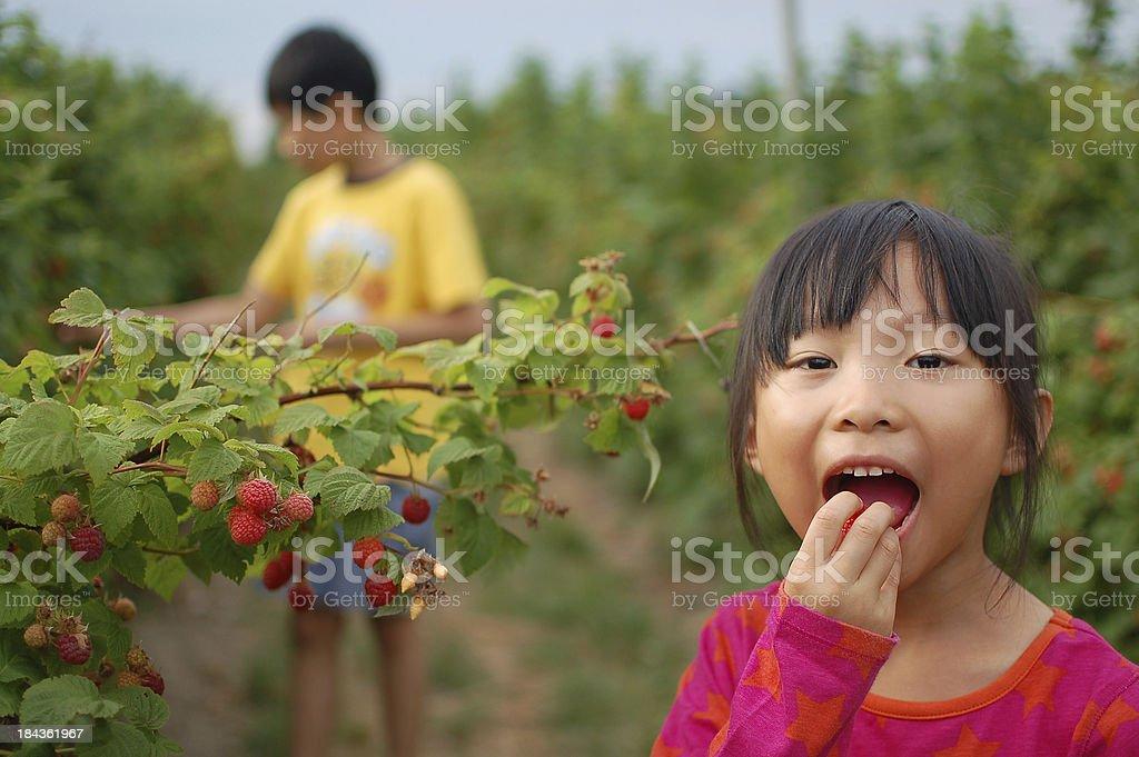 Eating fresh royalty-free stock photo