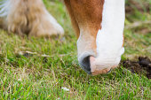 A horse eating grass on a field
