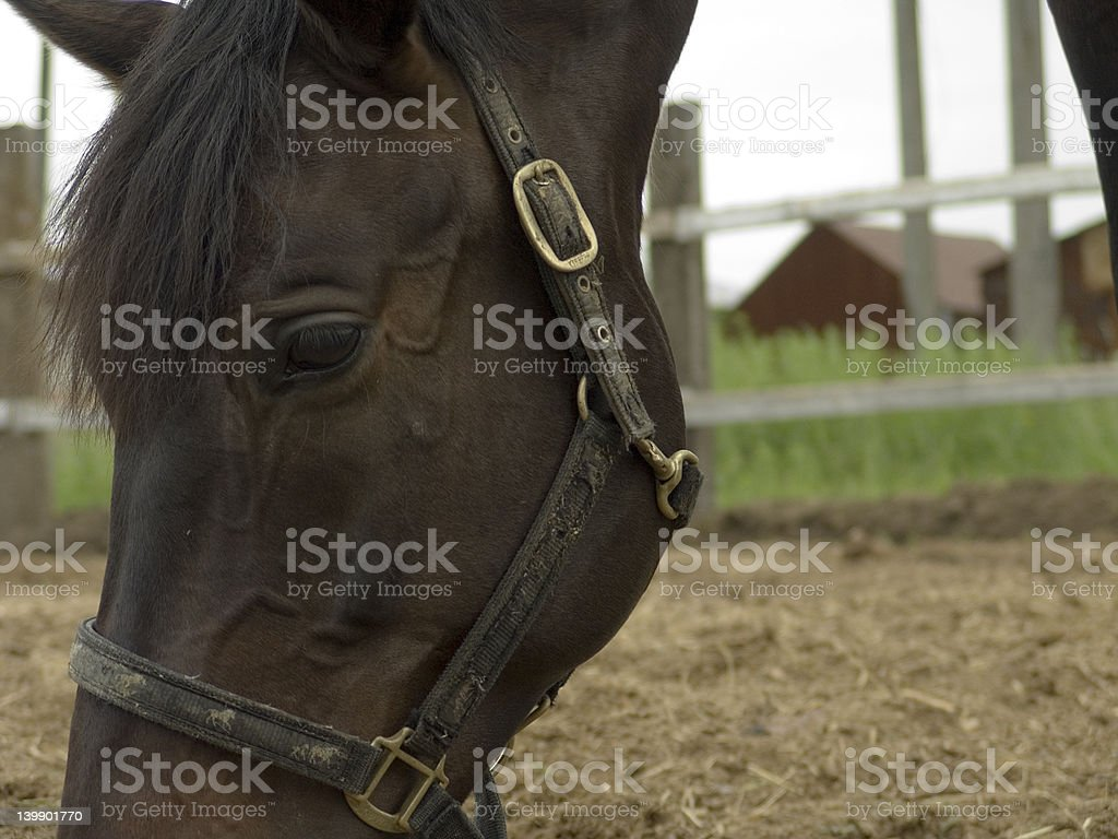 Eating horse close-up stock photo
