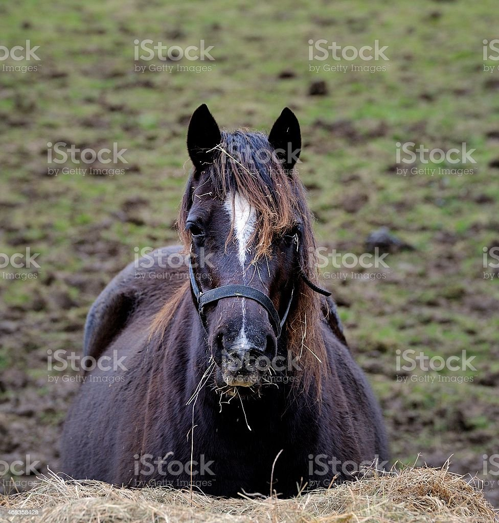 Eating Horse royalty-free stock photo