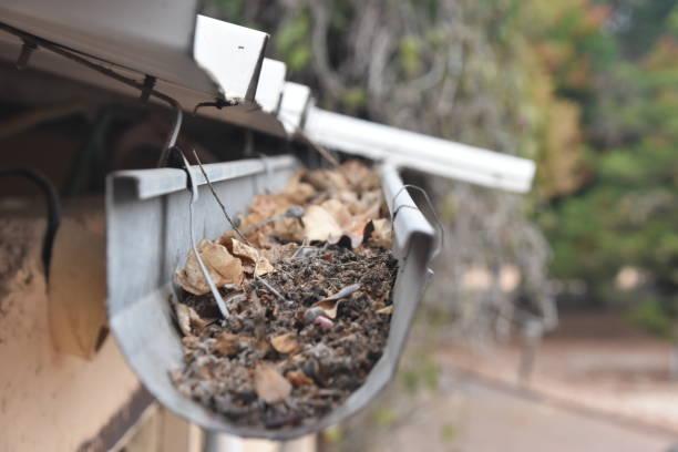 Dachrinne verstopft mit Blättern – Foto