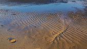 Beach crab on the sandy beach in sunlight