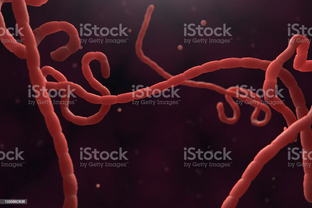 Ebola Virus Microscope stock photo
