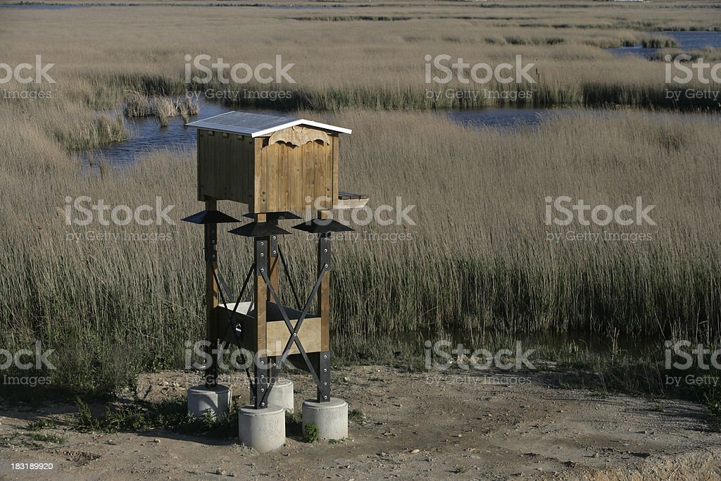 Ebro Delta, Spain, Lagoon Encanyissada royalty-free stock photo