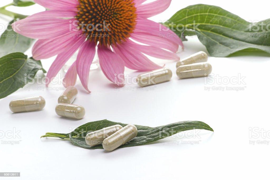 Echinacea capsules stock photo