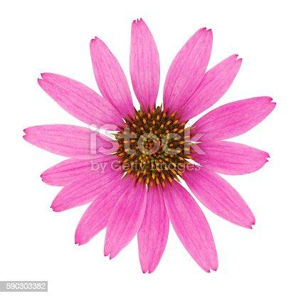Echinacea Flower isolated on white