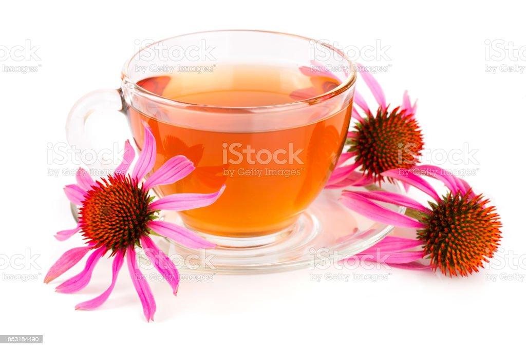 Echinacea tea isolated on white background. Medicinal tea stock photo