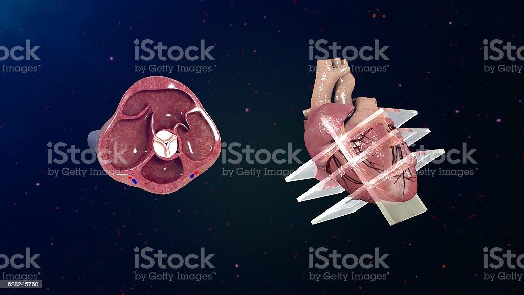 Echocardiogram stock photo