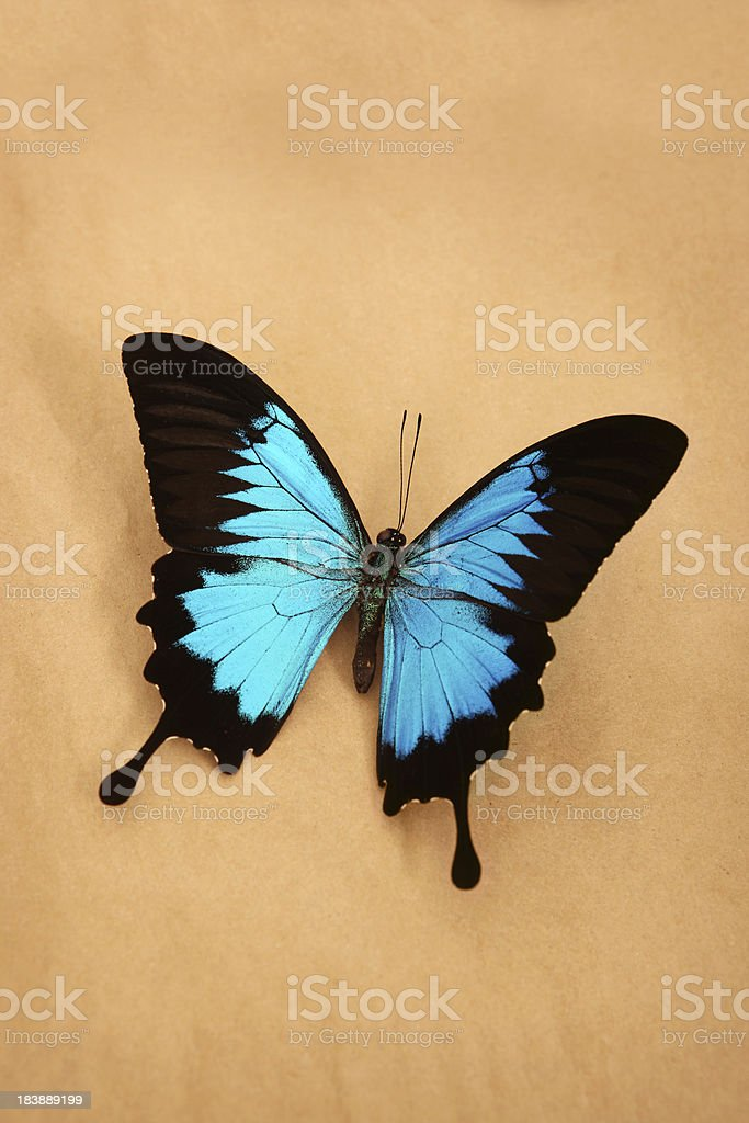 Eco Butterfly stock photo