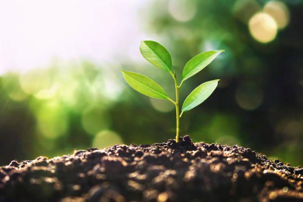 öko-Erdtag-Konzept. Baum wächst in der Natur mit Morgenlicht – Foto