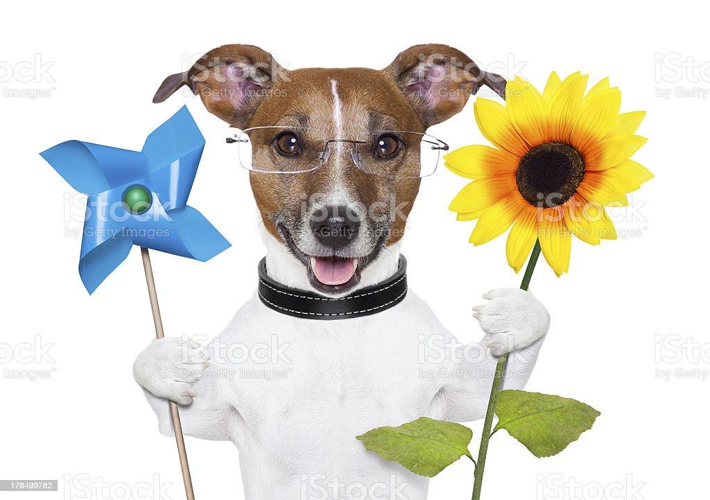 eco energy dog royalty-free stock photo