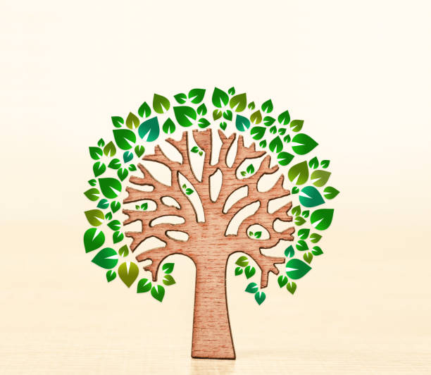 eco friendly tree with green - tree logo stock photos and pictures