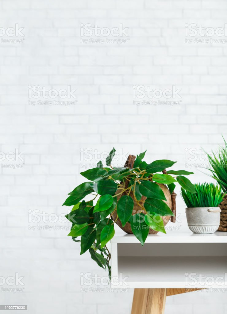 Indoor green plants in pots on table at white brick wall background....