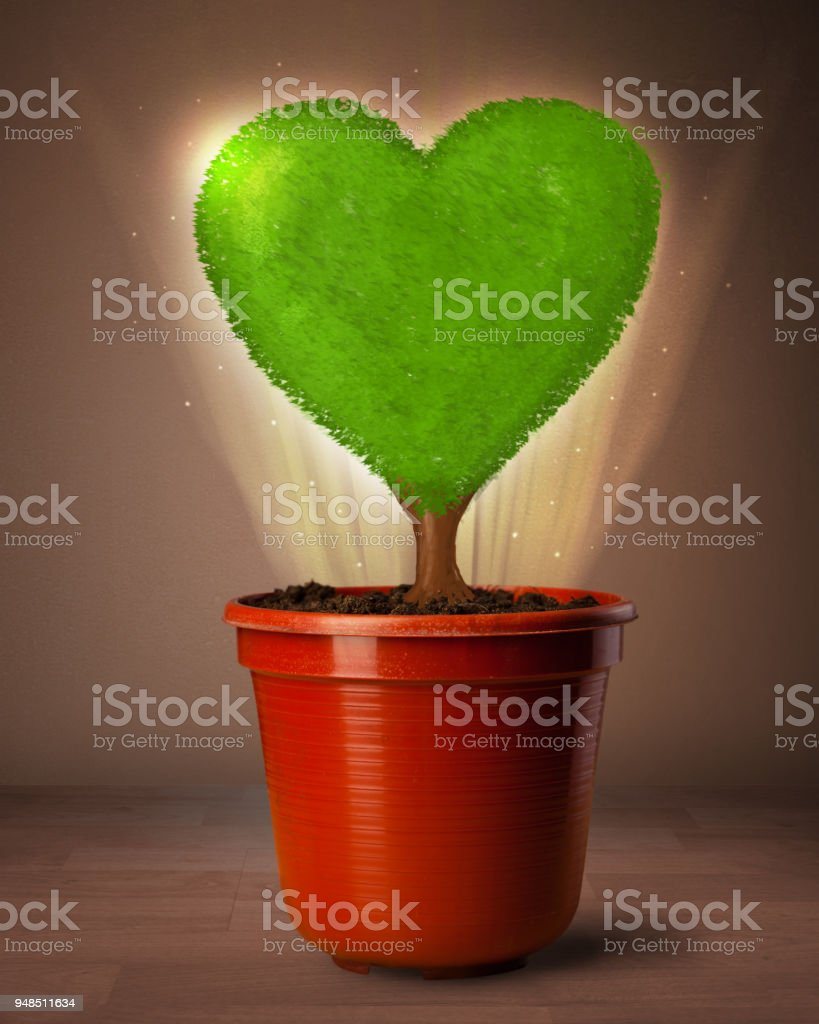 Eco heart tree coming out from flowerpot stock photo