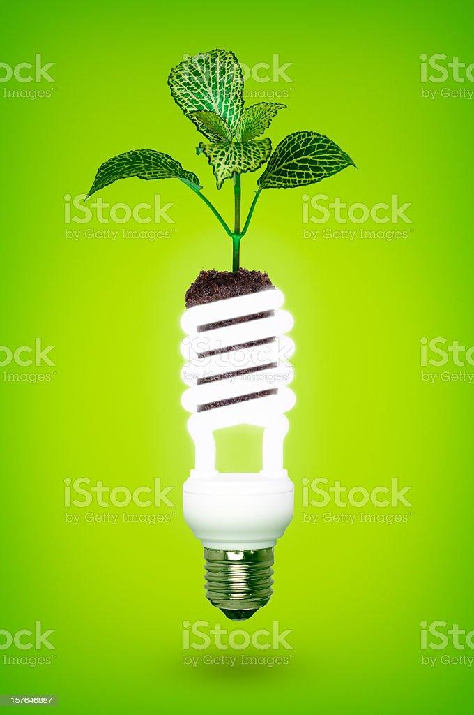 Eco life royalty-free stock photo