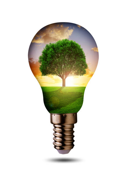 Eco light bulb with tree isolated on a white background. stock photo